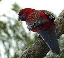 Red Larry by Biggzie
