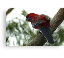 Red Larry Canvas Print