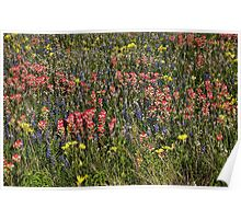 Field of Flowers in China Grove Poster