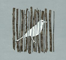 Bird by Alyn Spiller