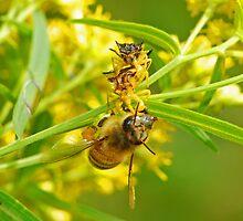 Ambush Assasin Bugs & Prey by Lynda   McDonald