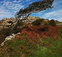 Helman Tor by Oliver  Monk