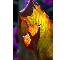 Backlit Flower , leaf Photographic Print