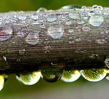 Bubbles, bubbles by mikrin