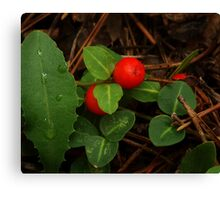 Partridge Berry Canvas Print