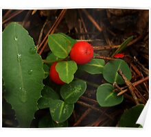 Partridge Berry Poster