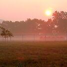 ~Ozarks Morning~ by NatureGreeting Cards ©ccwri