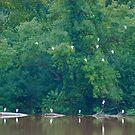Heron Haven by Jim Caldwell