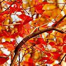 Memories of Autumn by kenspics