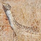 Sand Monitor (Varanus flavirufus)..  by Peter Ellen