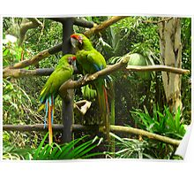 The odd couple, Costa Rica Poster