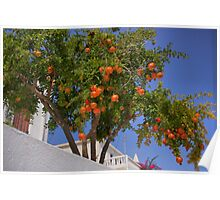 Pomegranate Tree Poster