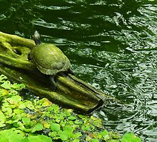 Turtle with Green Water by Guy C. André Tschiderer