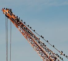 Birds in industry by Greg Birkett