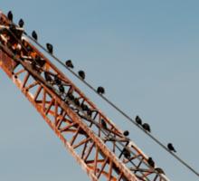 Birds in industry Sticker