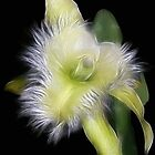 Amazing Orchid by vette