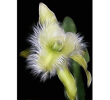 Amazing Orchid Photographic Print