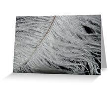 Feather Tips Greeting Card