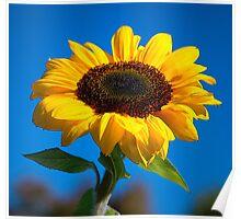 Sunflower challenge Poster