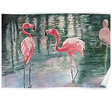 Flamingo Chat Time Poster
