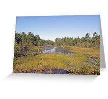 Swampscape View iN Northern Ontario Greeting Card