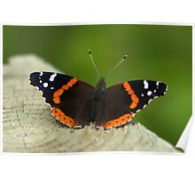 Red Admiral Poster