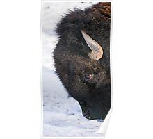 Bison #14 Poster