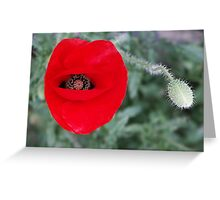 Madeira poppy Greeting Card