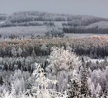 Winter forest landscape by Forestpictures