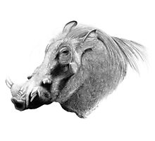 Don't Hate Me 'Cause I'm Beautiful - Warthog Photographic Print