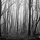 Eerie Forest by Jeff Harris