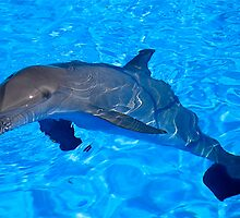 a bathing dolphin by Francesca Rizzo