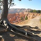 Five roots pointing to Bryce National Park  by Meeli Sonn