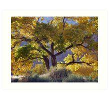 Cottonwood Tree In Autumn - Zion Art Print