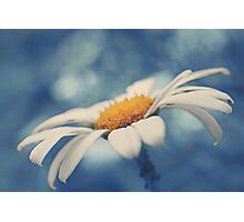 Hazy Daisy Photographic Print