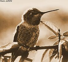 #539    Hummingbird In Sepia by MyInnereyeMike