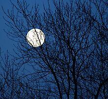 Moon Blue by Noel Raphael