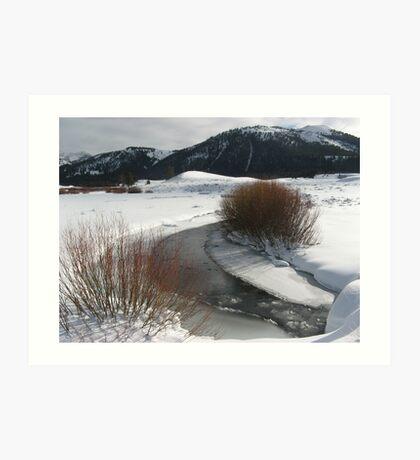 Winter Coolness Art Print