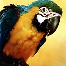 Macaw parrot by ljm000