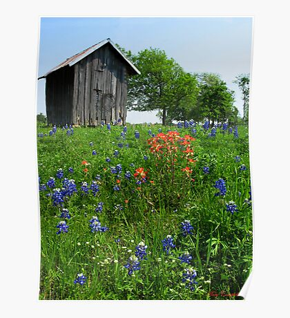 Bluebonnet Outhouse © Poster