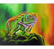 The Rainbow Lizard Photographic Print