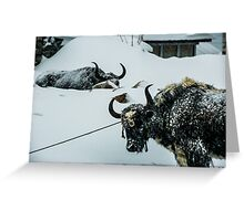Yak Life IV Greeting Card