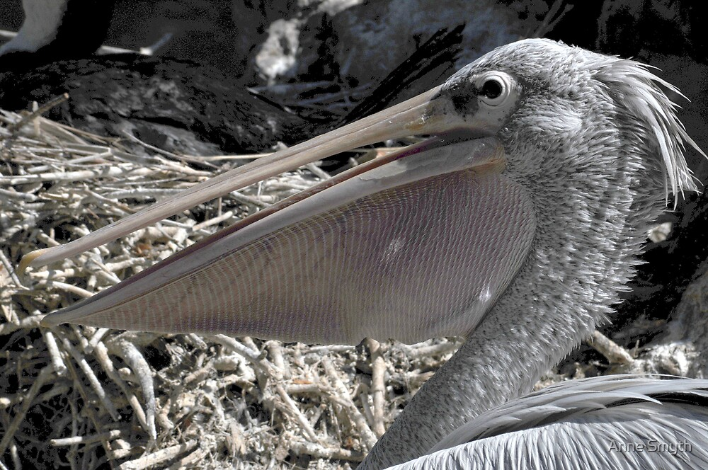 Pelican Pouch 1 by Anne Smyth