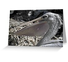 Pelican Pouch 1 Greeting Card