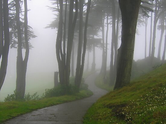 Trees in the Mist by Laurie Search
