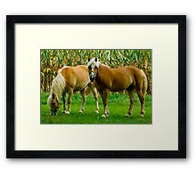 Amish Horses © Framed Print