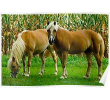 Amish Horses © Poster