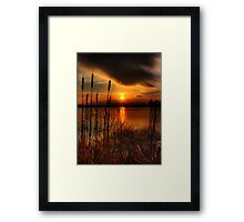 bullrush Sunset Framed Print
