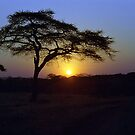 Sunrise over Serengeti, Tanzania by Bev Pascoe