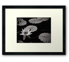 Japanese Garden.  Framed Print